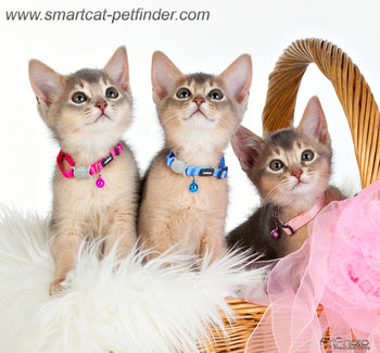Kitten Pink
