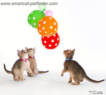 Kitten Orange