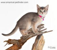 Kitten Hot Pink
