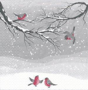 Domherrar i snö
