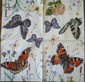 Olika storlekar fjärilar och blommor   3077