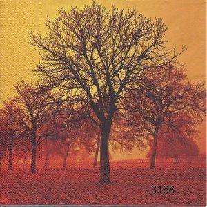 Höst i skogen   3168