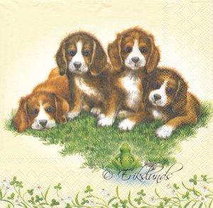 Små hundvalpar   3085