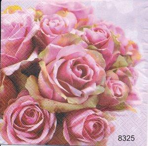 Rosa rosor   8325