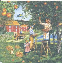 Äppelplockning   3051