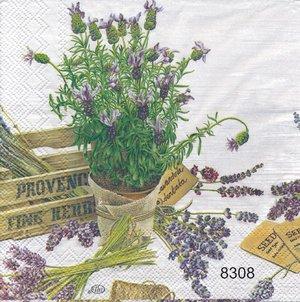 Lavendel  8308