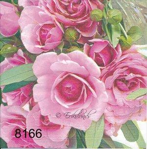 Rosa Rosor  8166