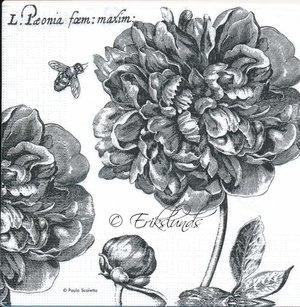 Svarta blommor  8170