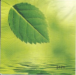 Grönt blad   3171