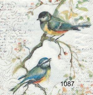 Småfåglar på gren  kaf1087