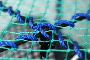 Prawn Creel, Green, Net Entrance