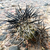 Tephrocactus spec. 'danielii' JN 1802 (North West Part of the province La Rioja, 1982m, La Rioja, Arg