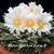 Ariocarpus retusus 'Mesa Garden form D'