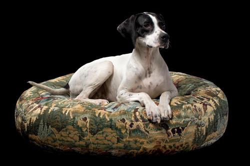 Hundkudde / hundsäng / hundbädd - 85x21cm - Jakt- & fiskemotiv i storlek Medium