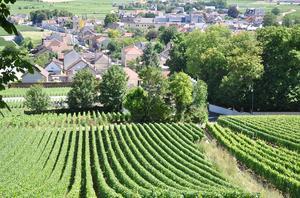 Mousserande vin/champagne kurs våren 2021