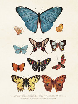 Poster Fjärilar 18 * 24 cm