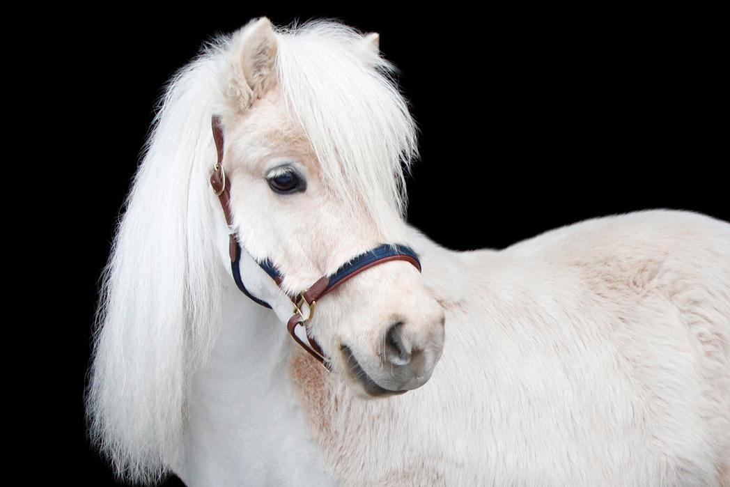 Ponny lädergrimma + grimskaft - PS of Sweden