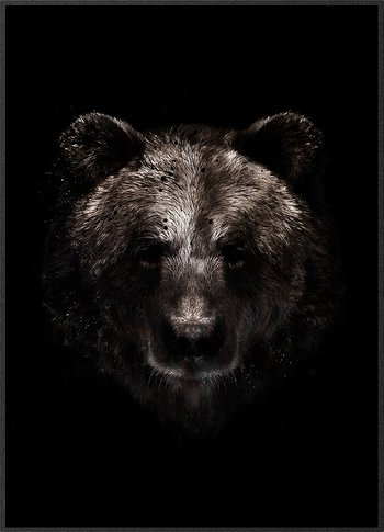 Brown bear in the dark