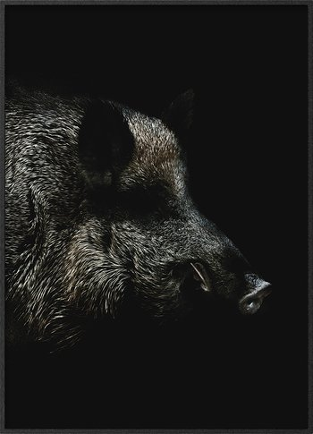 Wild boar in the night