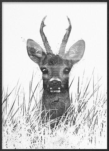 Curious Roe buck