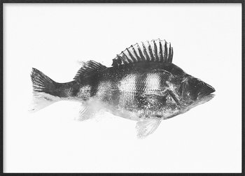 Perch monochrome