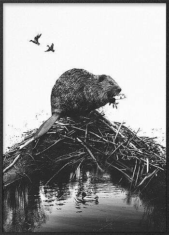 Bäver