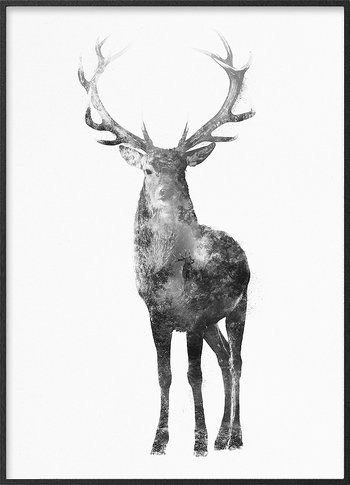 Red stag in rut
