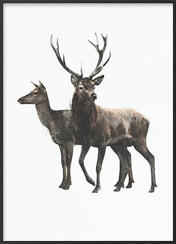 Red deer pair