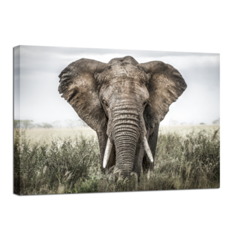 TAVLA CANVAS ELEPHANT IN GRASS