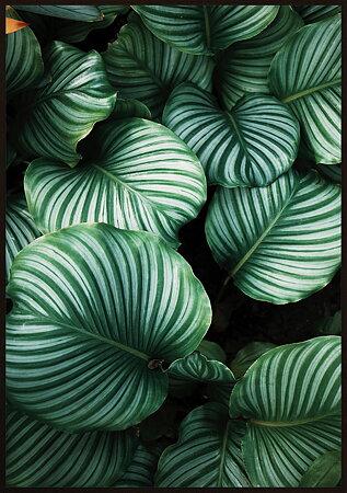 Gröna växtblad natur 1 poster