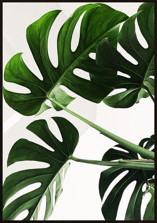 Gröna växtblad natur 2 poster