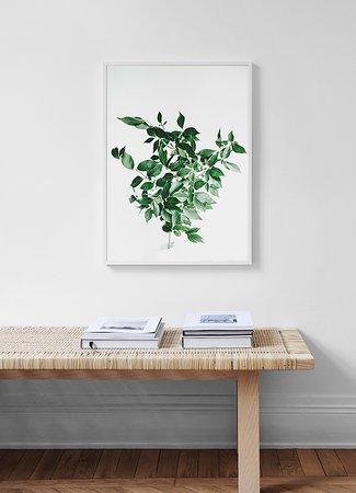 Gröna växtblad natur 4 poster