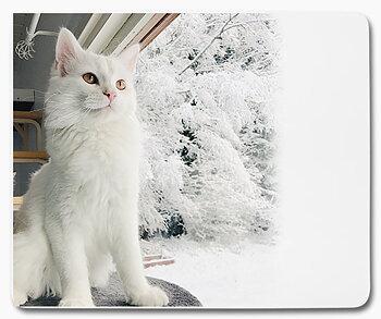 Vinter snö katt Milo 1 - musmatta