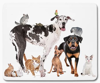 Hund katt kanin chinchilla fågel djur 1 musmatta