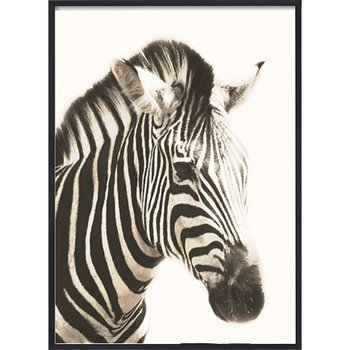 African Zebra Head - Poster
