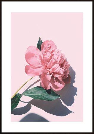 Blommor natur 51 - poster