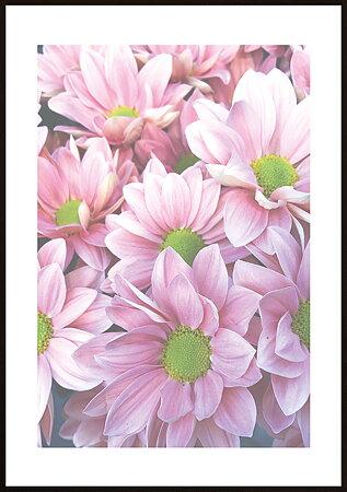 Rosa blommor ram 4 - poster