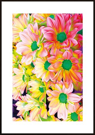 Rosa blommor ram 5 - poster