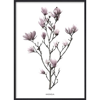 Pink Magnolia - Poster