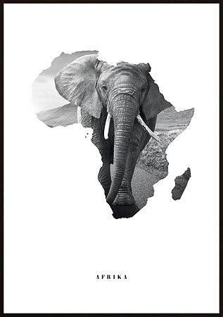 AFRIKA ELEFANT KARTA 3 POSTER