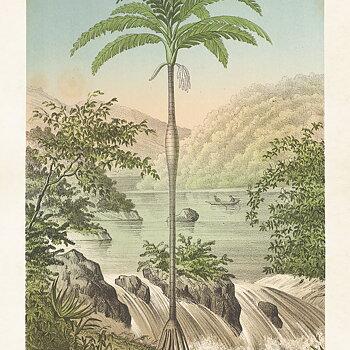 Poster Palm 70x100 cm