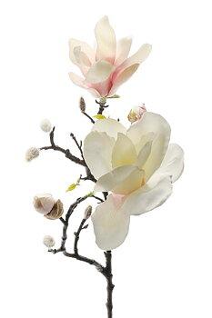 Sidenblomma Magnolia