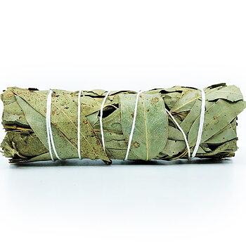 Eucalyptus Bundle (Eucalyptus globulus)