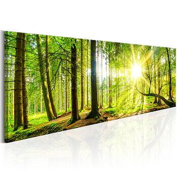 Tavla - Canvastavla - Sol i skog