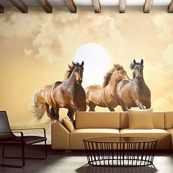 Fototapet - Köra häst