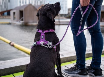 Dog Copenhagen Comfort Walk Air™ Sele Purple Passion