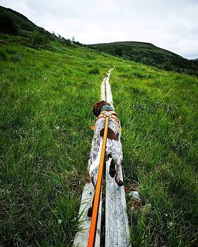 Non-Stop Dogwear bungee leash 2,8 m *Skidor/Cykel*