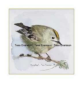 Konstkort Tryck Kungsfågel