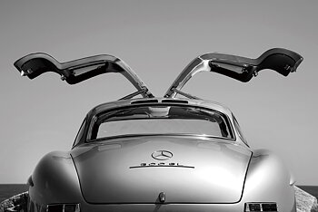 Mercedes Måsvinge 80 X 120cm II