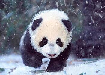 3D KORT PANDA